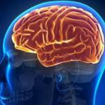 Особенности мозга алкоголика