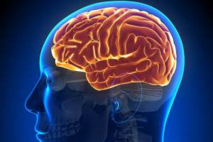 Особенности мозга алкоголика - фото